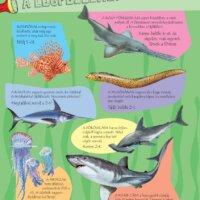 Zseblámpával - A tenger alatt
