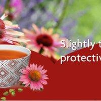 Yogi Tea® - Echinacea bio tea
